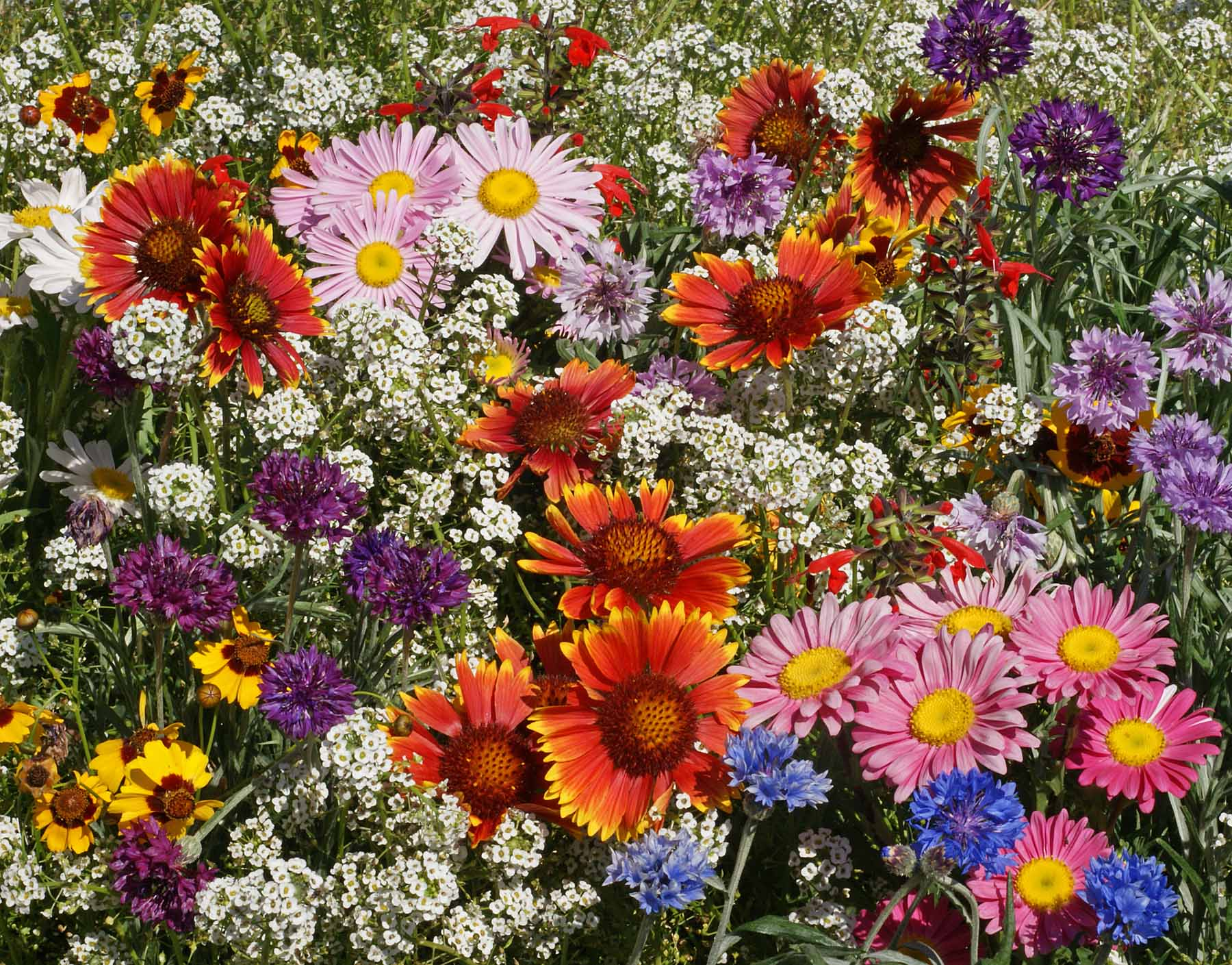 For Beautiful Wildflowers in the Spring, Plant Them in the Fall